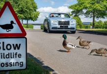 Rolls-Royce ducks